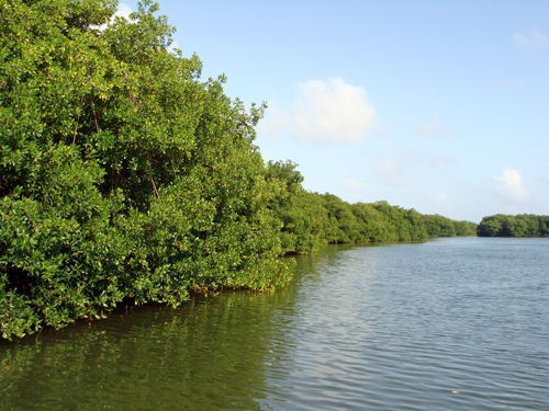 Old Point Mangrove 2008